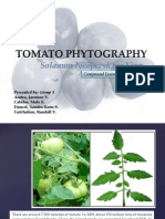 Tomato Phytography