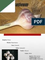Ppt Garlic