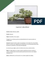 Ficha de Mantenimiento - Ligustrum Obtusifolium