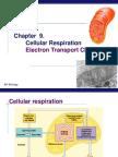 Chpt 9 Electron Transport Chain Part 4 2007 2008