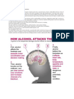 Alcohol`s Damaging Effects on the Brain
