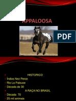 A Paloosa