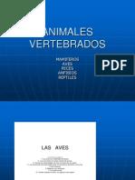 animales-vertebrados.ppt