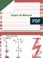 Origen y Esponjas 2014-1
