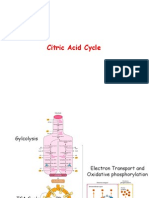 TCA enzymes.ppsx