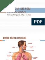 Anatomi Fisiologi Sistem Pernafasan