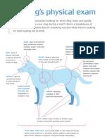Dog Physical Exam