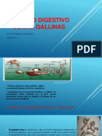 Aparato Digestivo de Las Gallinas