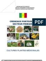 Culture de plantes médecinales
