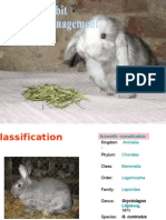 1 Rabbit Care & Management