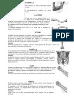 10 Huesos y 10 Musculos Principales Del Cuerpo - 2 h - Oav