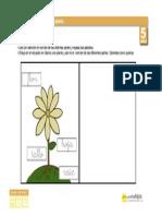plantas_partesdelaplanta_5.pdf