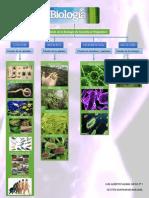 BIOLOGIA II_MAPA MENTAL_Subdivisión de la Biología de Acuerdo al Organismo