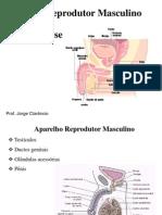 Espermatogênese