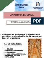 Brg.I.06.S.cardiovascular