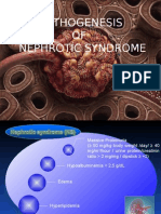 Pathogenesis of Nephrotic Syndrome