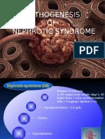 Pathogenesis of Nephrotic Syndrome