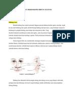 Stuktur Anatomi Dan Mikroskopis Hidung Manusia