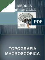Medula Oblongada2013