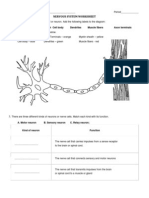 Nervous System Worksheet Grade 5   Nervous System   Spinal ...