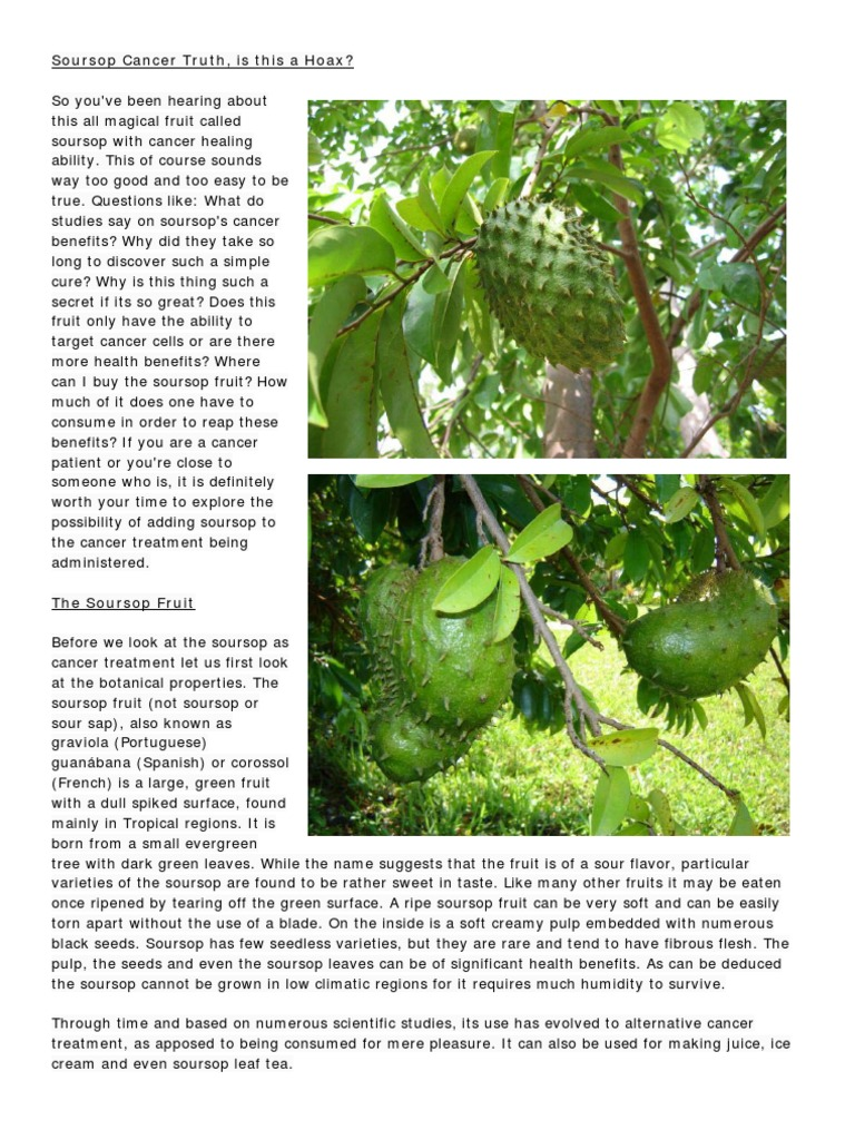 Soursop Cancer Truth Radiation Therapy Cancer