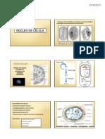 Nucleo e DNA 22042013