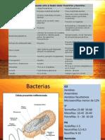 1.PROCA EUCA, Apoptosis Macro Moleculas Membrana Celular, Transporte Citoesqueleto