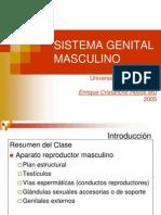 Genital Masculino