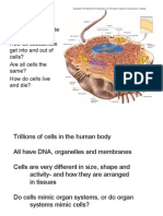 Intro Cells
