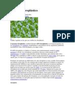 Genoma cloroplástico