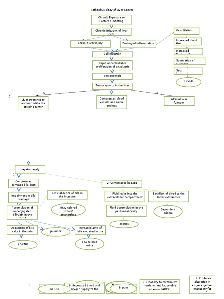 Pathophysiology Of Liver Cancer 2 Doc