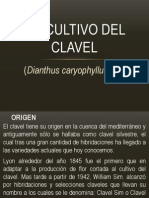cultivo de clavelitoss .pptx