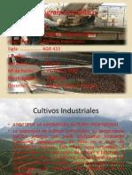 flori cultivos industriales .ppt