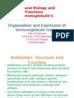 Organization and Expression of Immunoglobulin Genes