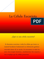 lacelulaeucariotica-111106034113-phpapp01