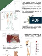 9.-+Inmune+2013.ppt