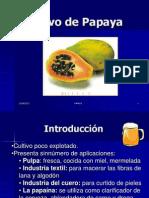 Cultivo de Papaya 8