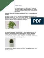 Despre Plante Care Purifica Aerul