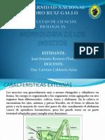 Morfologia de Los Insectos