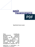 Maiz Transgenico Word