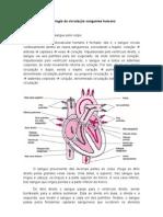Fisiologia da circulação sanguínea humana