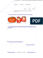 Fotos Der Tomatensorte Fleischtomate Aus Neapel - Solanum Lycopersicon L