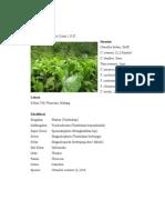Theaceae, Malvaceae, Passifloraceae