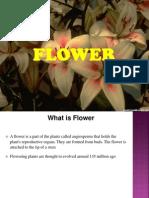 Project on Flower v1.0