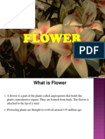 Project on Flower v1.0