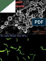Methanogenic ArchaebacteriA