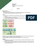 Etiología Sistema_Digestivo