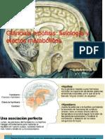 presentaciongeneralidadesunidad3-110223121117-phpapp01[1]