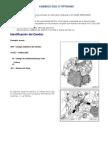 Instructivo Cambio de Aceite Para Cajas DSG o S-Tronic de 6 Velocidades