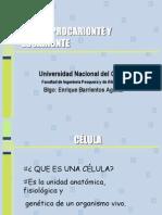 Celula Procarionte y Eucarionte 01